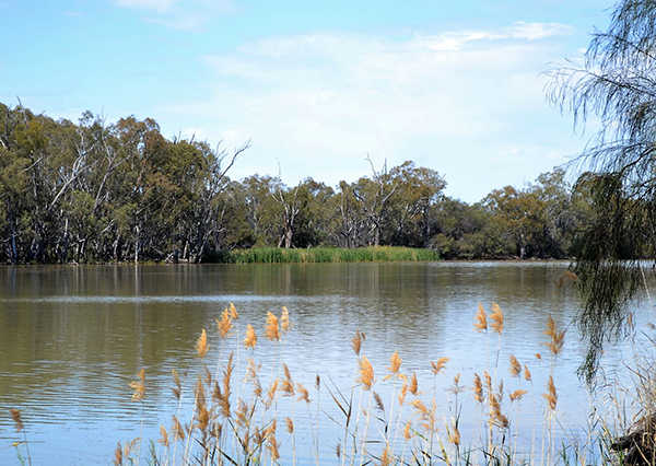 Murray River, Calperum Station - photo by Amy Roberts