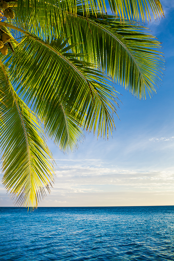 coconut palm tree leaves over endless ocean, Fiji