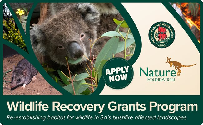 Wildlife Recovery Fund banner